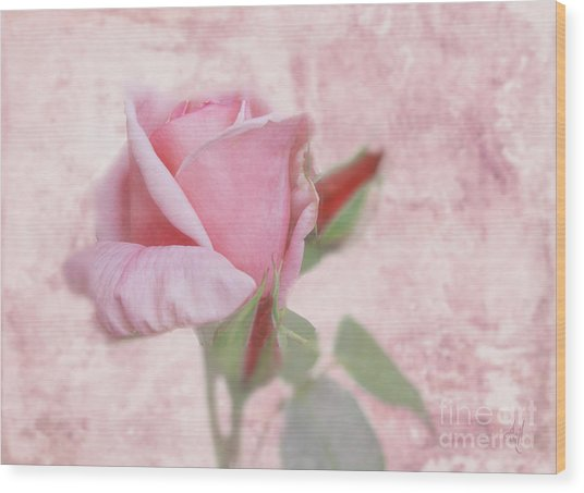 Pale Pink Rose Wood Print
