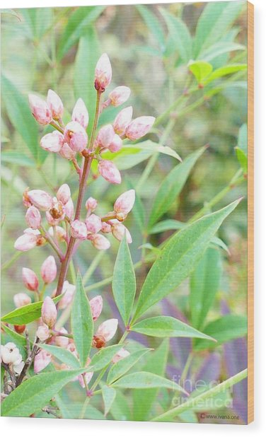 Pale Powder Pink Plant Wood Print