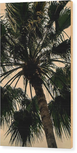 Palm Against The Sky Wood Print