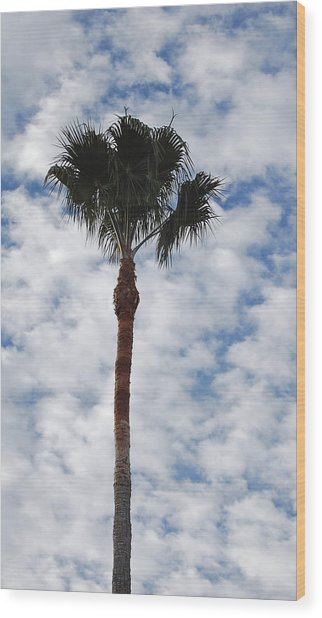 Palm And Clouds Wood Print by Jean Booth