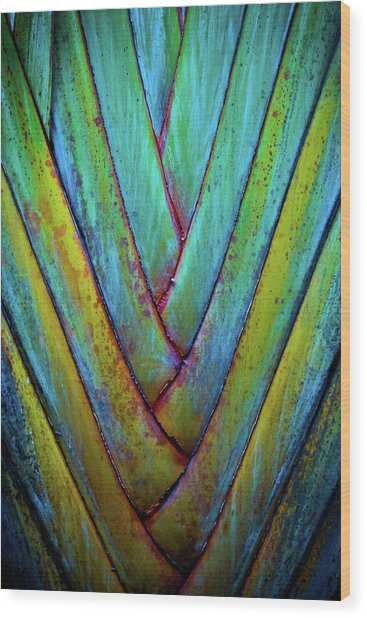 Palm Frond Wood Print