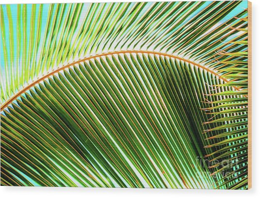 Palm Frond Sway Wood Print