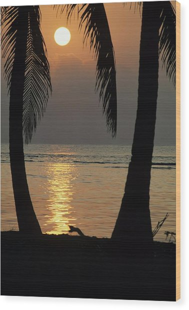 Palm Fronds And Sunset Over Caribbean Wood Print