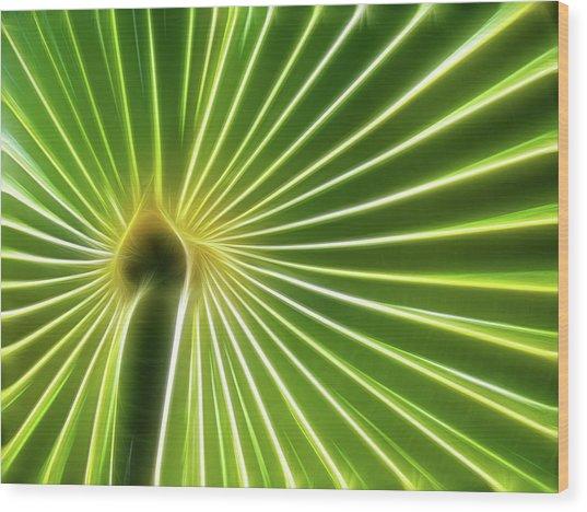 Palm Glow Wood Print