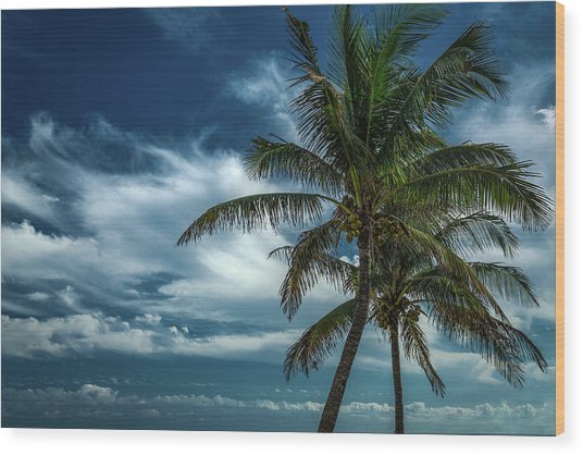 Palm Tree Against The Sky Wood Print