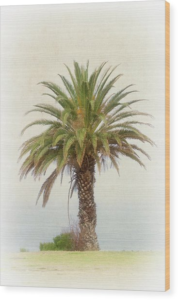 Palm Tree In Coastal California In A Retro Style Wood Print