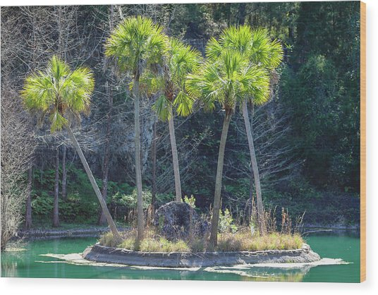 Wood Print featuring the photograph Palm Tree Island by Raphael Lopez