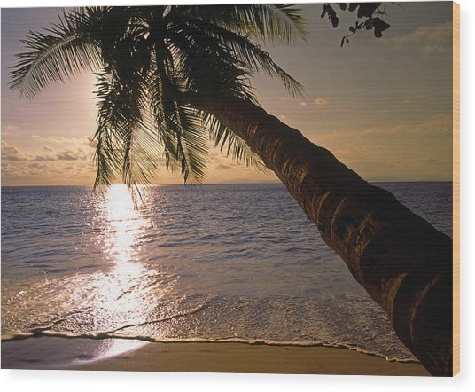 Palm Tree Over The Beach In Costa Rica Wood Print
