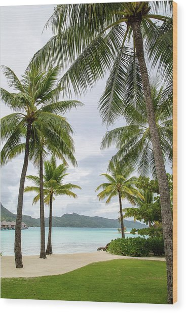 Palm Trees 1 Wood Print