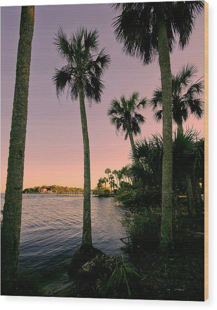 Palm Trees And Pink Skies Wood Print