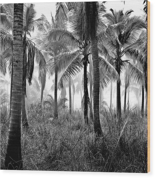 Palm Trees - Black And White Wood Print