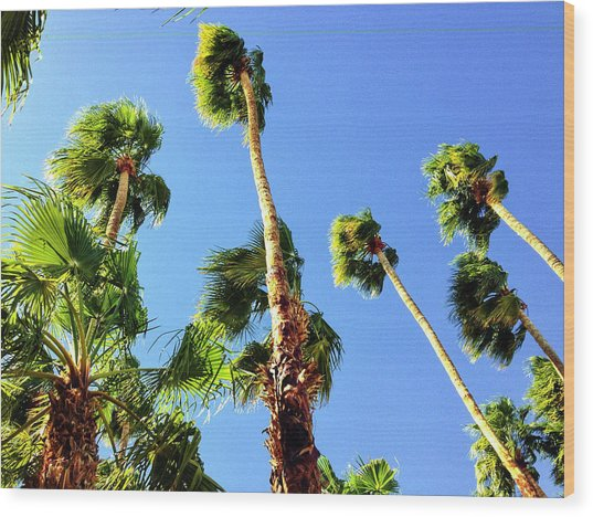 Palm Trees Looking Up Wood Print