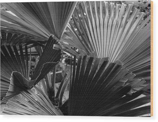 Palmetto In Black And White Wood Print