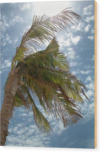 Palms Against The Sky - Mexico Wood Print