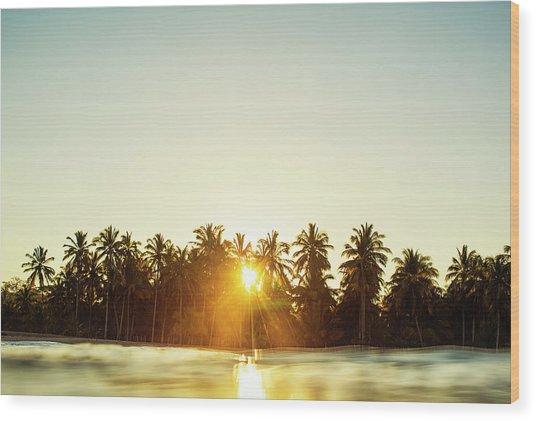 Palms And Rays Wood Print