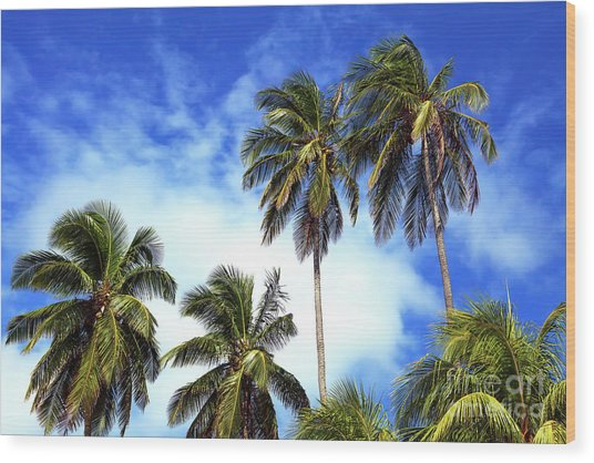Palms Wood Print by John Rizzuto