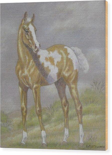 Palomino Paint Foal Wood Print by Dorothy Coatsworth