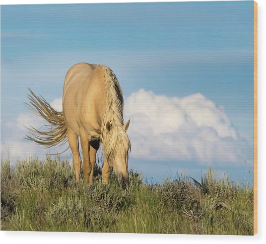 Palomino Wild Stallion In The Evening Light Wood Print