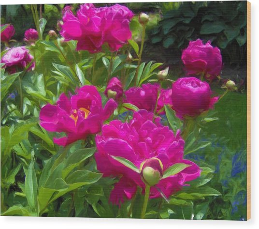 Pam's Perfect Peonies Wood Print