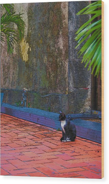 Panama Cat Wood Print by Robert Boyette