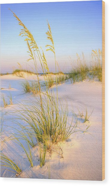 Panama City Sands Wood Print by JC Findley
