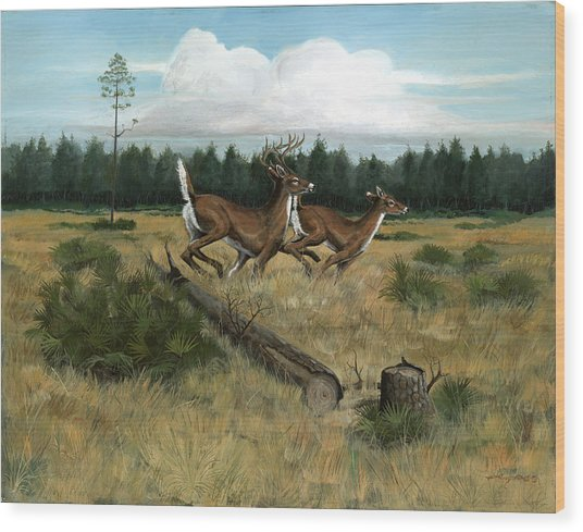 Panhandle Deer Wood Print by Timothy Tron