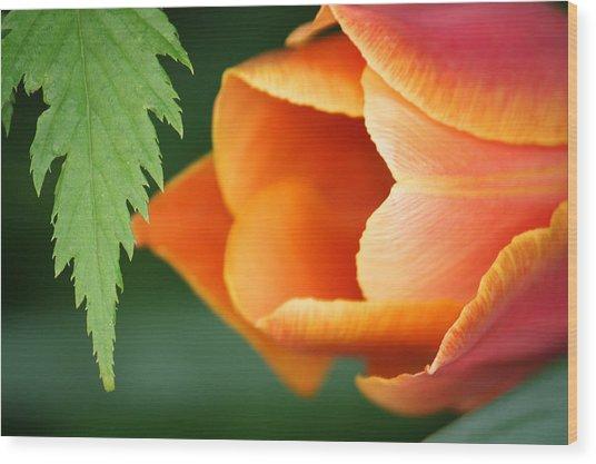 Pankow Tulip Wood Print