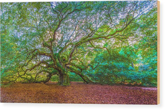Panoramic Angel Oak Tree Charleston Sc Wood Print