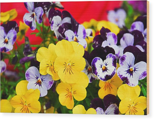 Pansies And Red Cart Wood Print