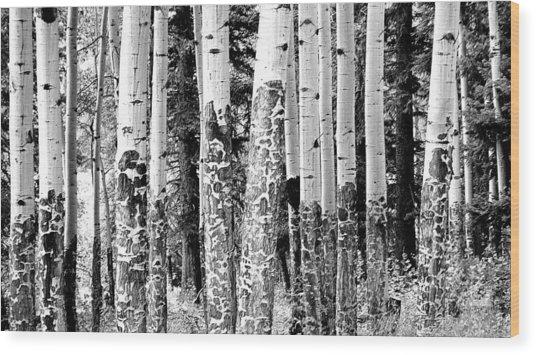 Paper Birch Wood Print