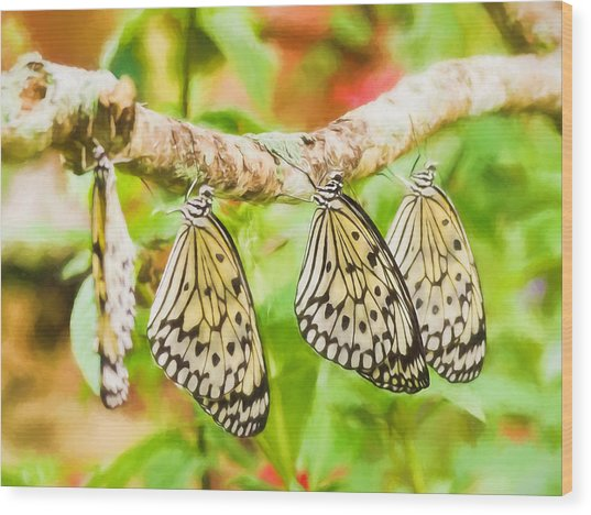 Paper Kite Butterflies Wood Print