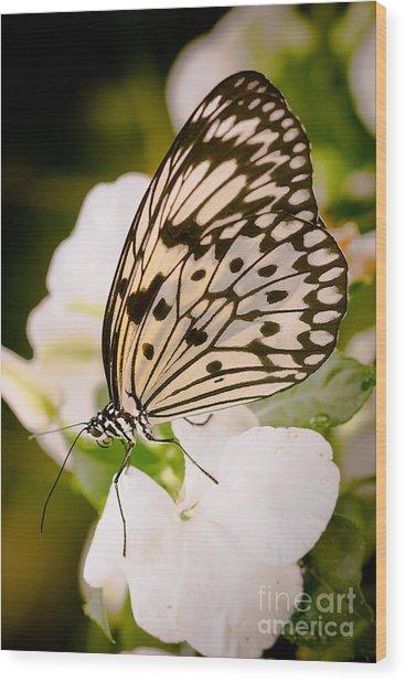 Paper Kite On White Wood Print