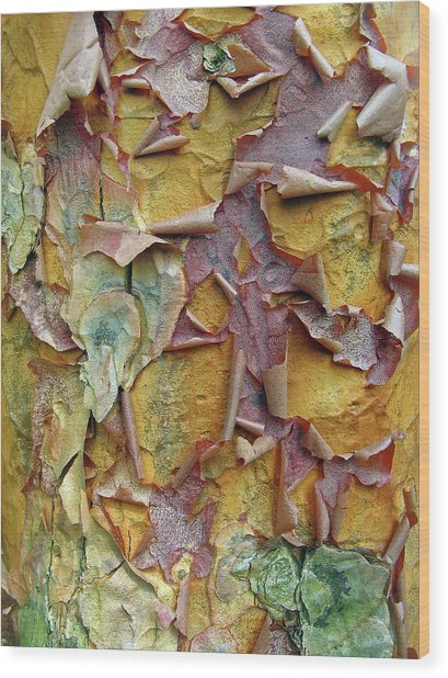 Paperbark Maple Tree Wood Print