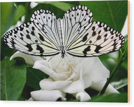 Paperkite On Gardenia Wood Print