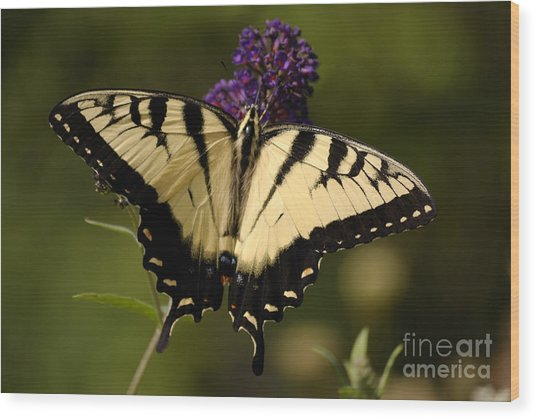 Papilio Yellow Wood Print
