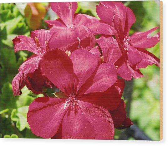 Paradise Bloom Wood Print