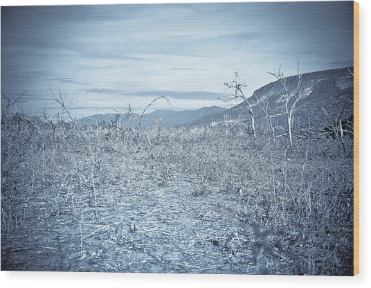 Parched Wood Print by Keith Sanders