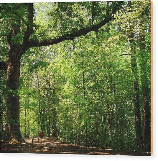 Paris Mountain State Park South Carolina Wood Print