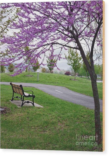 Wood Print featuring the photograph Park Bench With Redbud Tree Winona Mn By Yearous by Kari Yearous