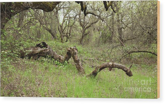 Park Serpent Wood Print