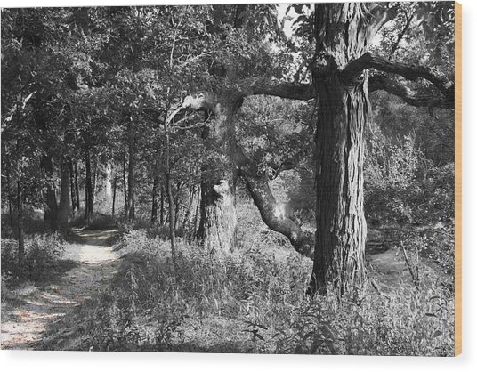 Parkland Trail Wood Print