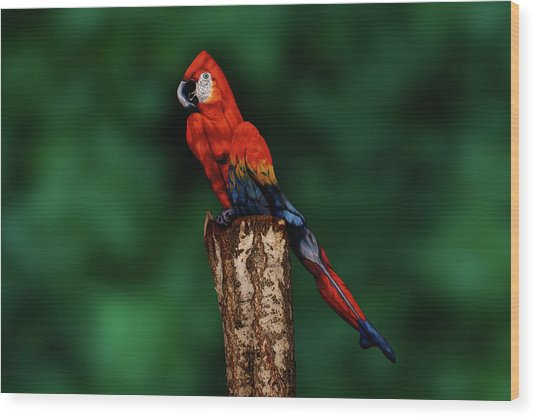 Parrot Bodypainting Illusion Wood Print by Johannes Stoetter