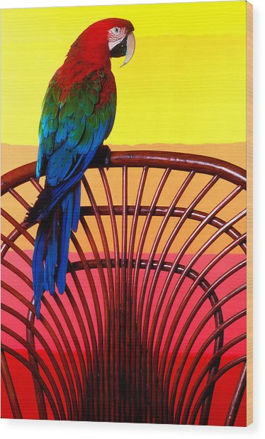 Parrot Sitting On Chair Wood Print