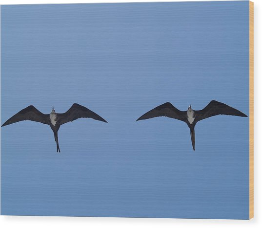 Partners In Flight Wood Print by Richard Mansfield