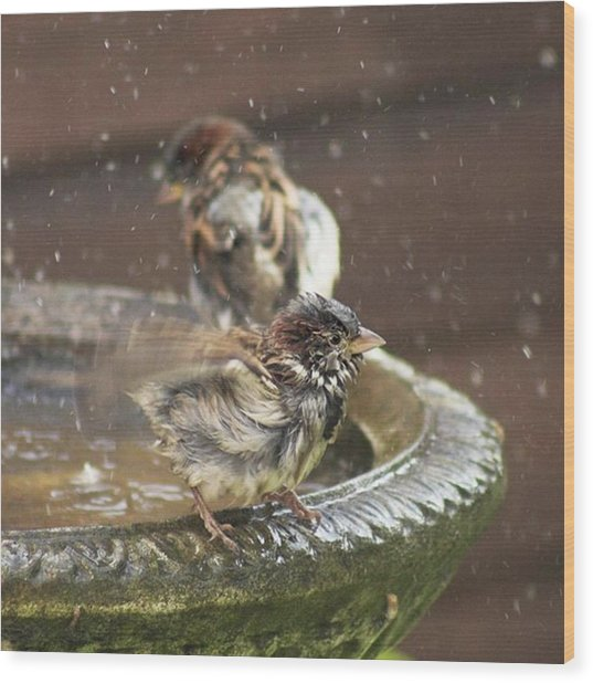 Pass The Towel Please: A House Sparrow Wood Print