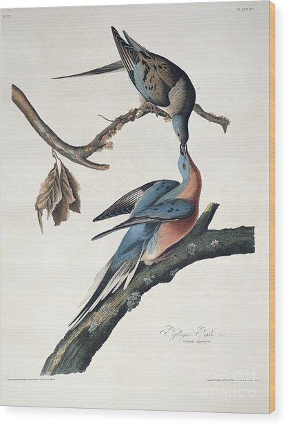 Passenger Pigeon Wood Print