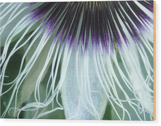 Passion Flower 3 - Passiflora Edulis Var. Flavicarpa Wood Print