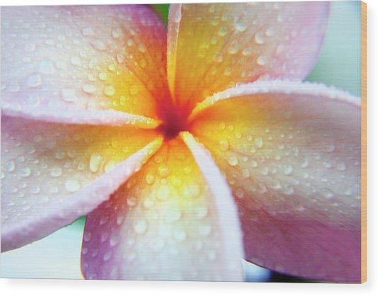Pastel Droplets Wood Print