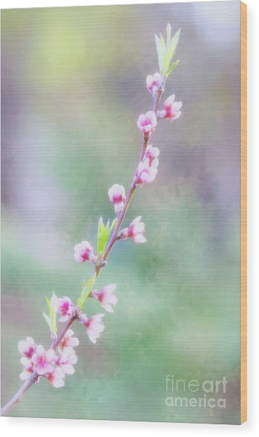 Pastel Painted Peach Blossoms Wood Print