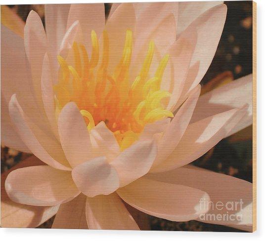 Pastel Pleasures  Wood Print